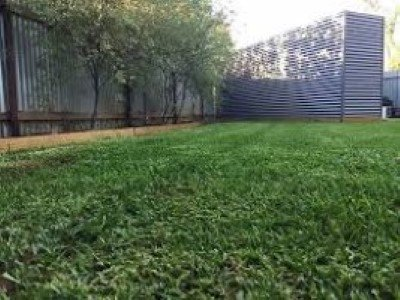 couch turf grass at a mordialloc garden supplies business in melbourne