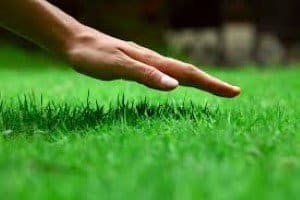 hand on lawn in mordialloc yard. used lawn blended soil, from a boundary rd, mordialloc, garden supplies business in melbourne