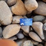 large-flat-brown-pebbles with a melbourne garden supplies business card