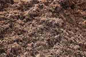 mushroom compost in bulk, near me, ideal for veggie gardens in melbourne