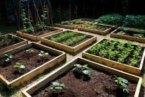 ideal raised bed vegetable garden in boundary rd mordialloc, melbourne