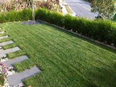 tall fescue instant grass at a mordialloc garden supplies business in melbourne
